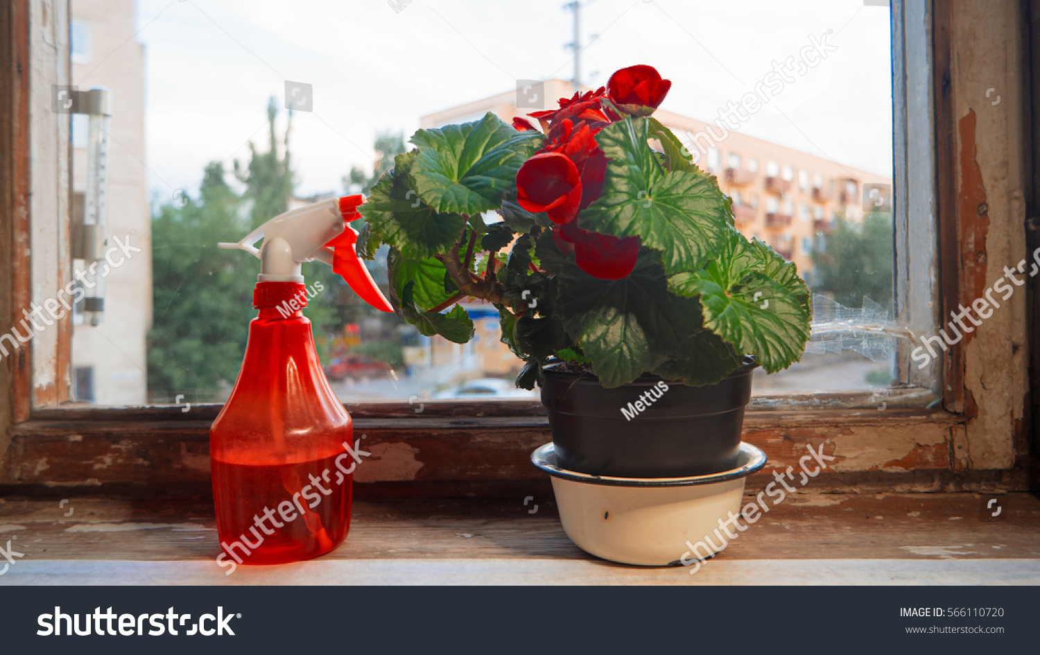 stock-photo-houseplant-with-big-red-flow