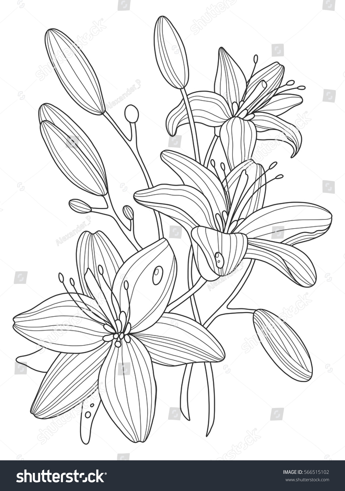 Lily flowers coloring book vector illustration stock vector lily flowers coloring book vector illustration anti stress coloring for adult tattoo stencil izmirmasajfo