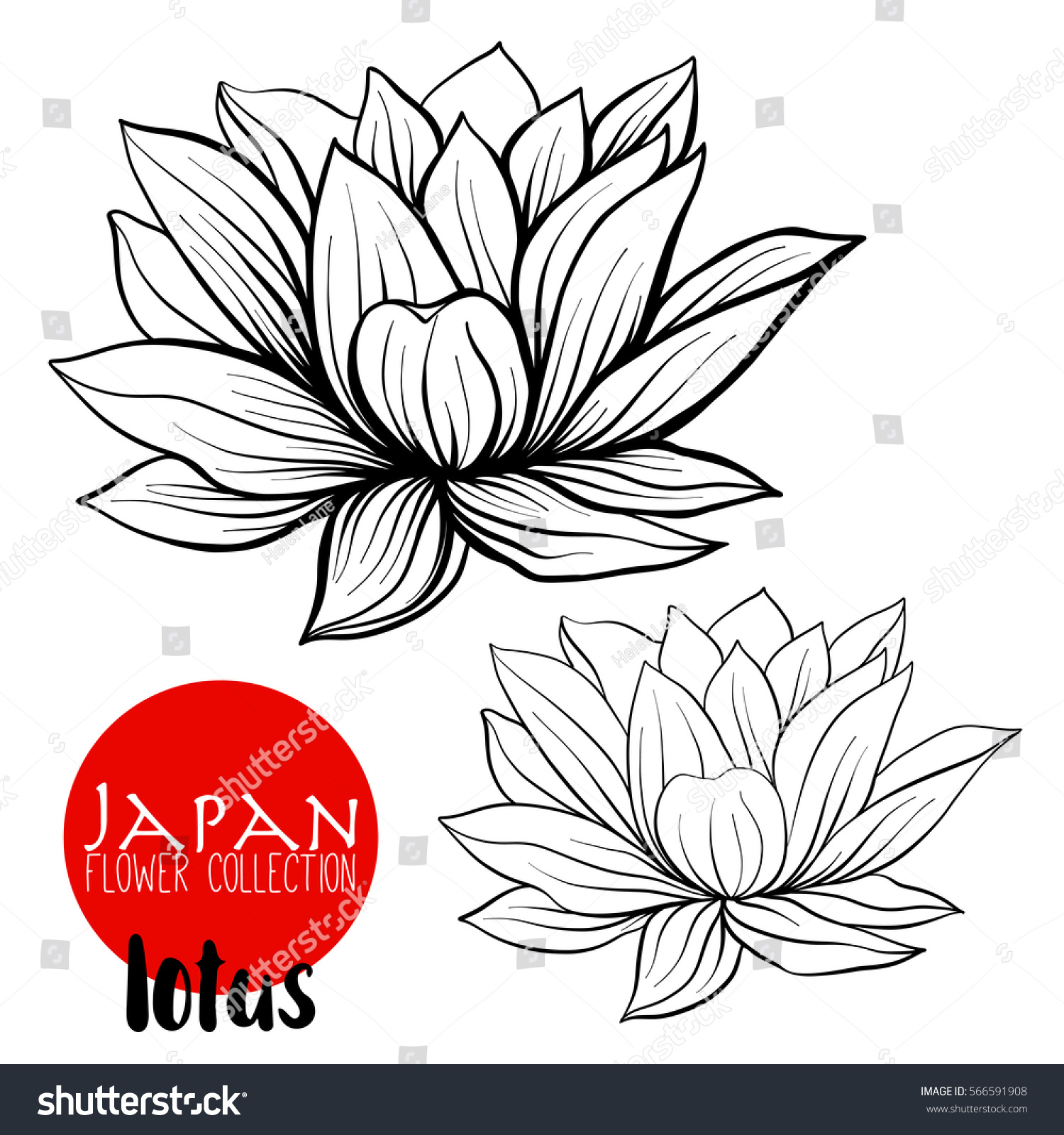 Lotus Flowers Stock Line Vector Illustration Stock Vector Royalty
