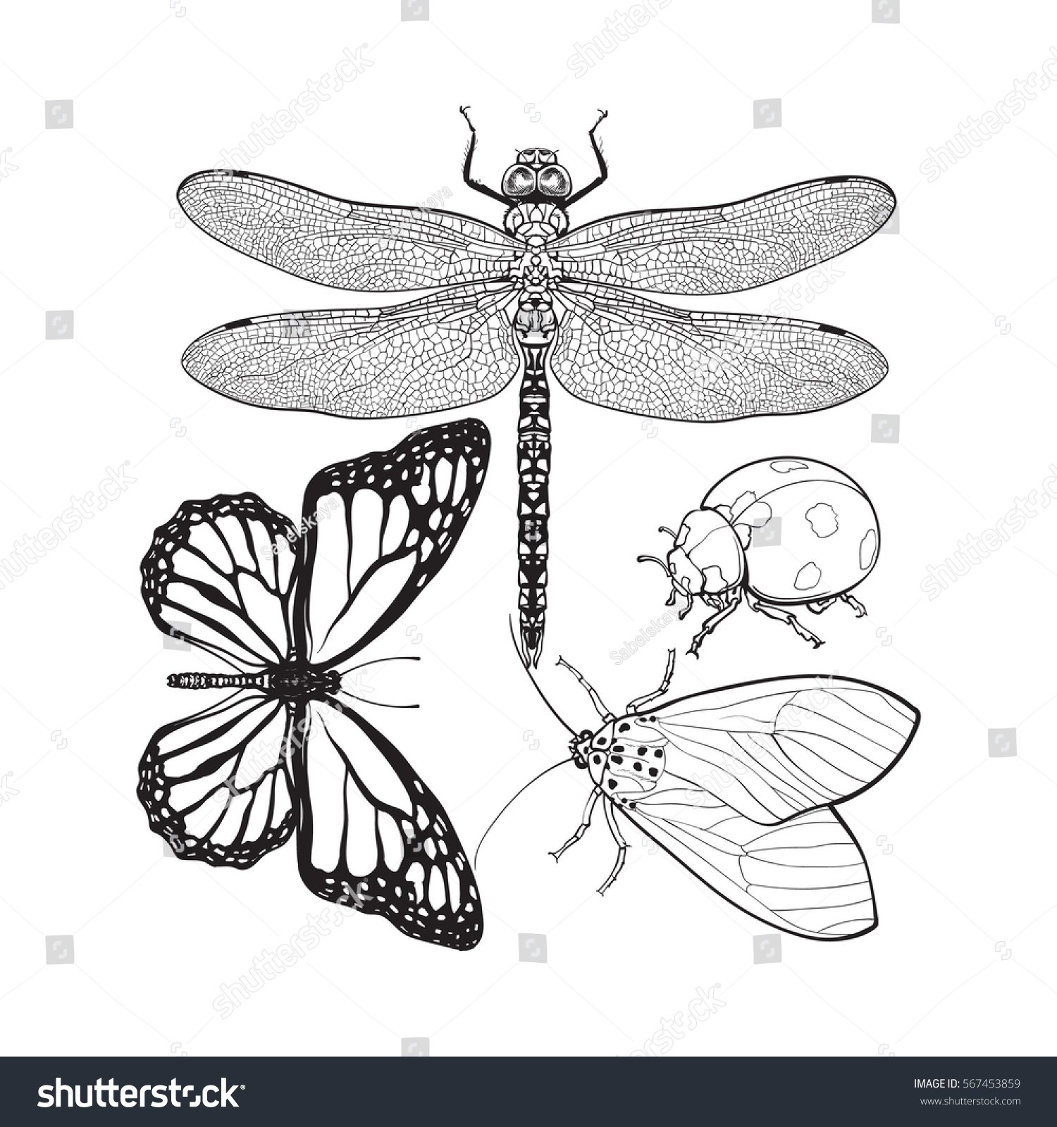 set insects like dragonfly butterfly ladybird stock vector