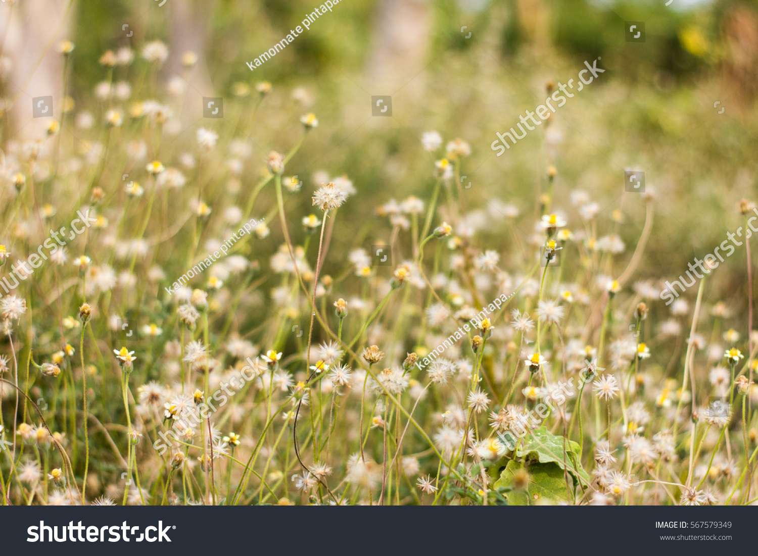 Grass And White Flowers Wallpaper Ez Canvas