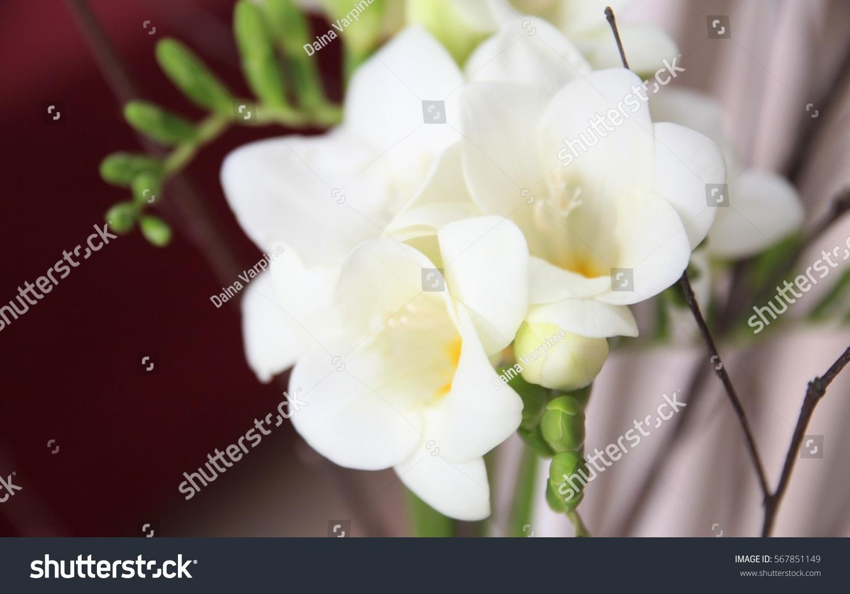 White Freesia Flowers Bouquet Stock Photo Edit Now 567851149