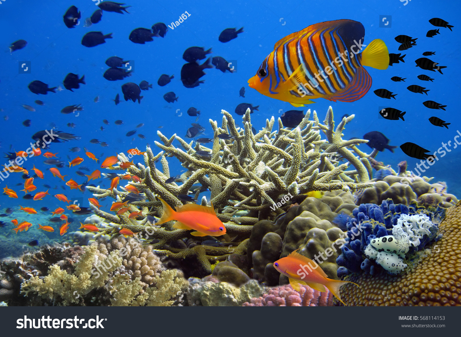 Coral reef underwater panorama school colorful stock photo for Colorful tropical fish