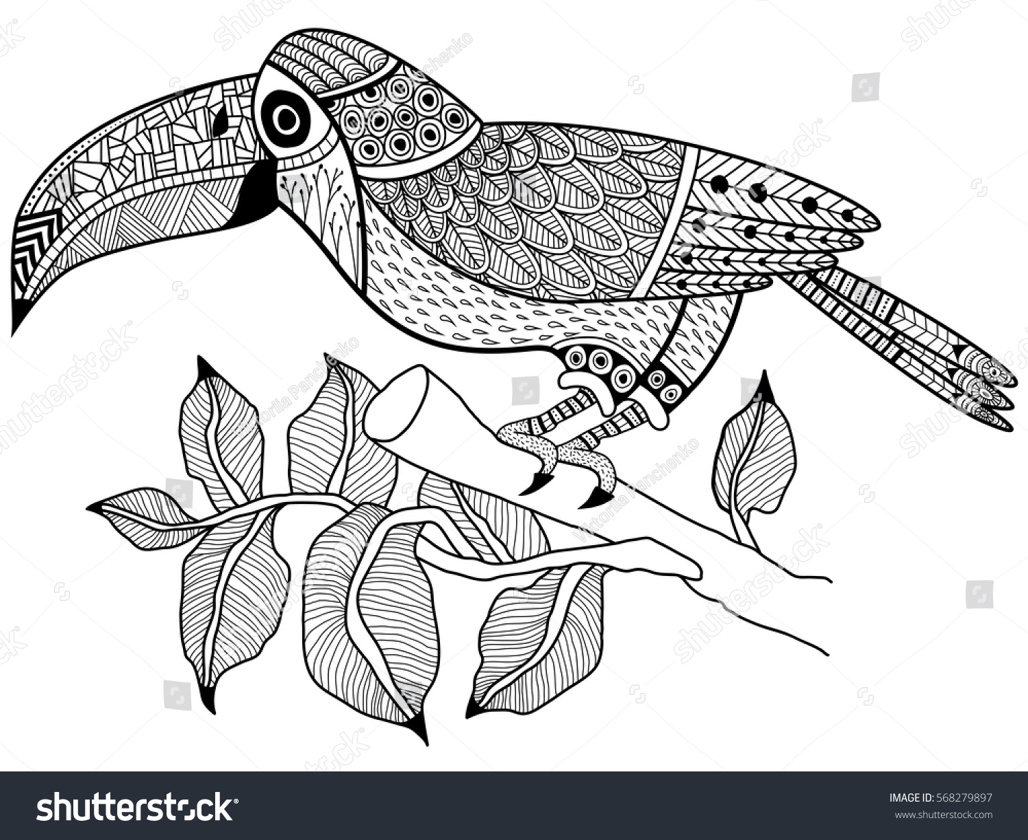 toucan bird on branch tree coloring stock vector 568279897