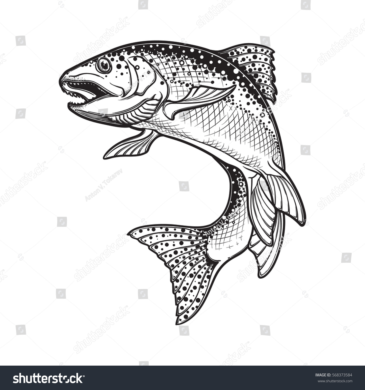 Realistic Intricate Drawing Rainbow Trout Jumping Stock Vector ...