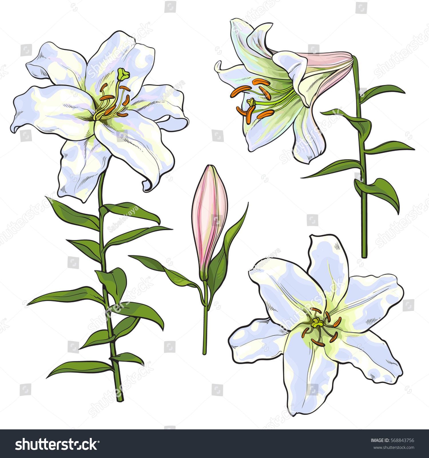 Set hand drawn white lily flowers stock vector royalty free set of hand drawn white lily flowers in side and top view sketch style vector izmirmasajfo