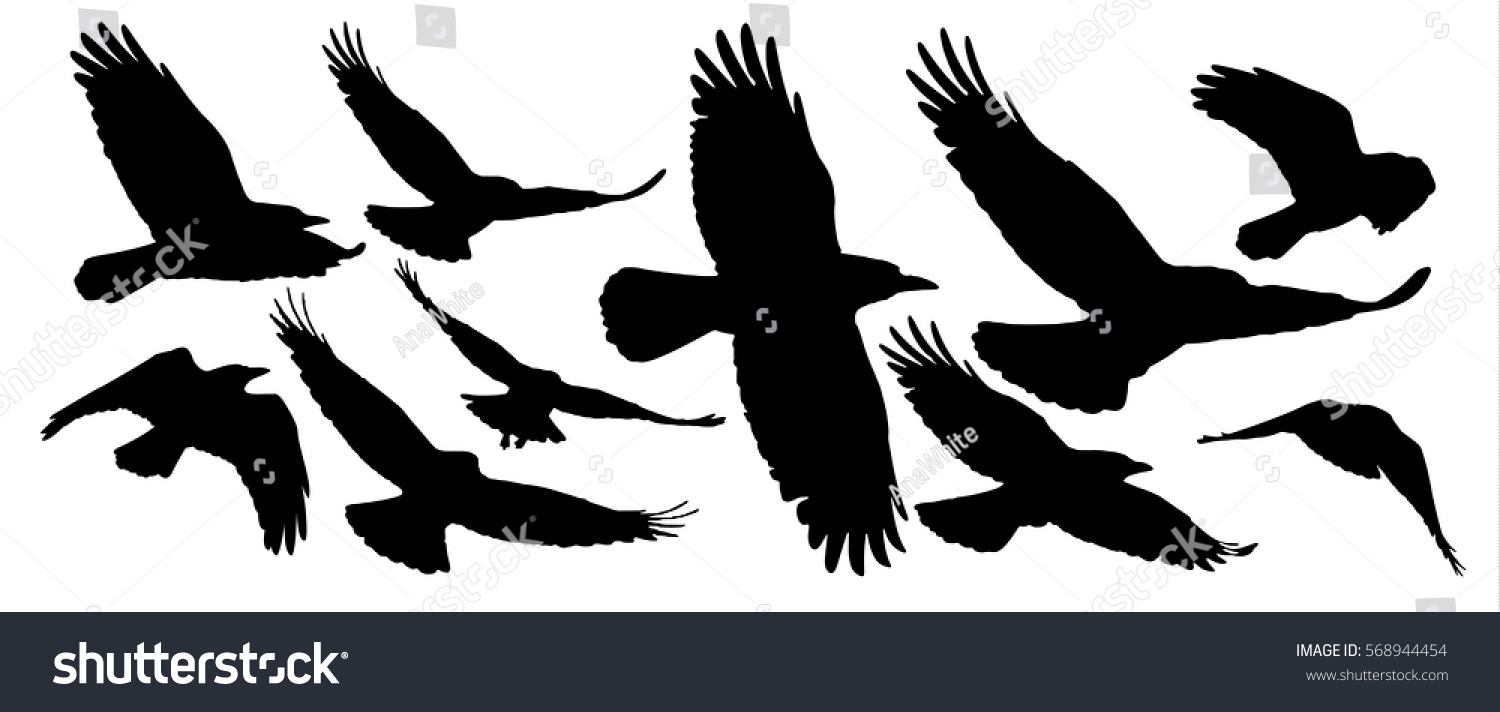 Set black isolated silhouettes crows collection stock vector set of black isolated silhouettes of crows collection of different birds position biocorpaavc
