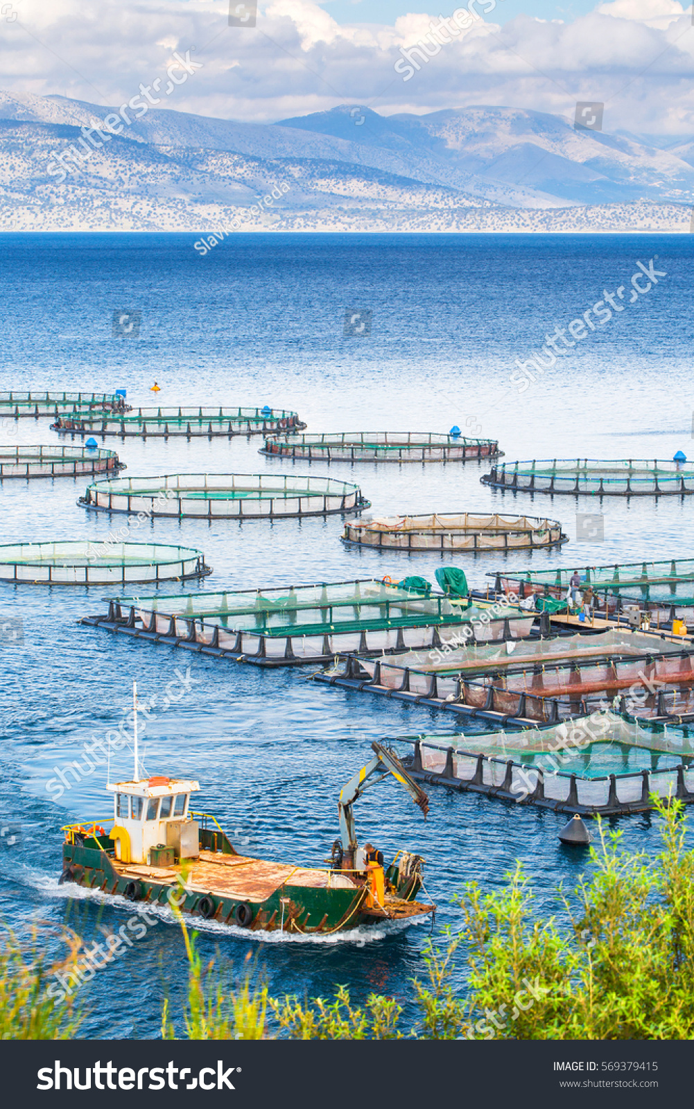 Sea fish farm cages fish farming stock photo 569379415 for What is fish farming