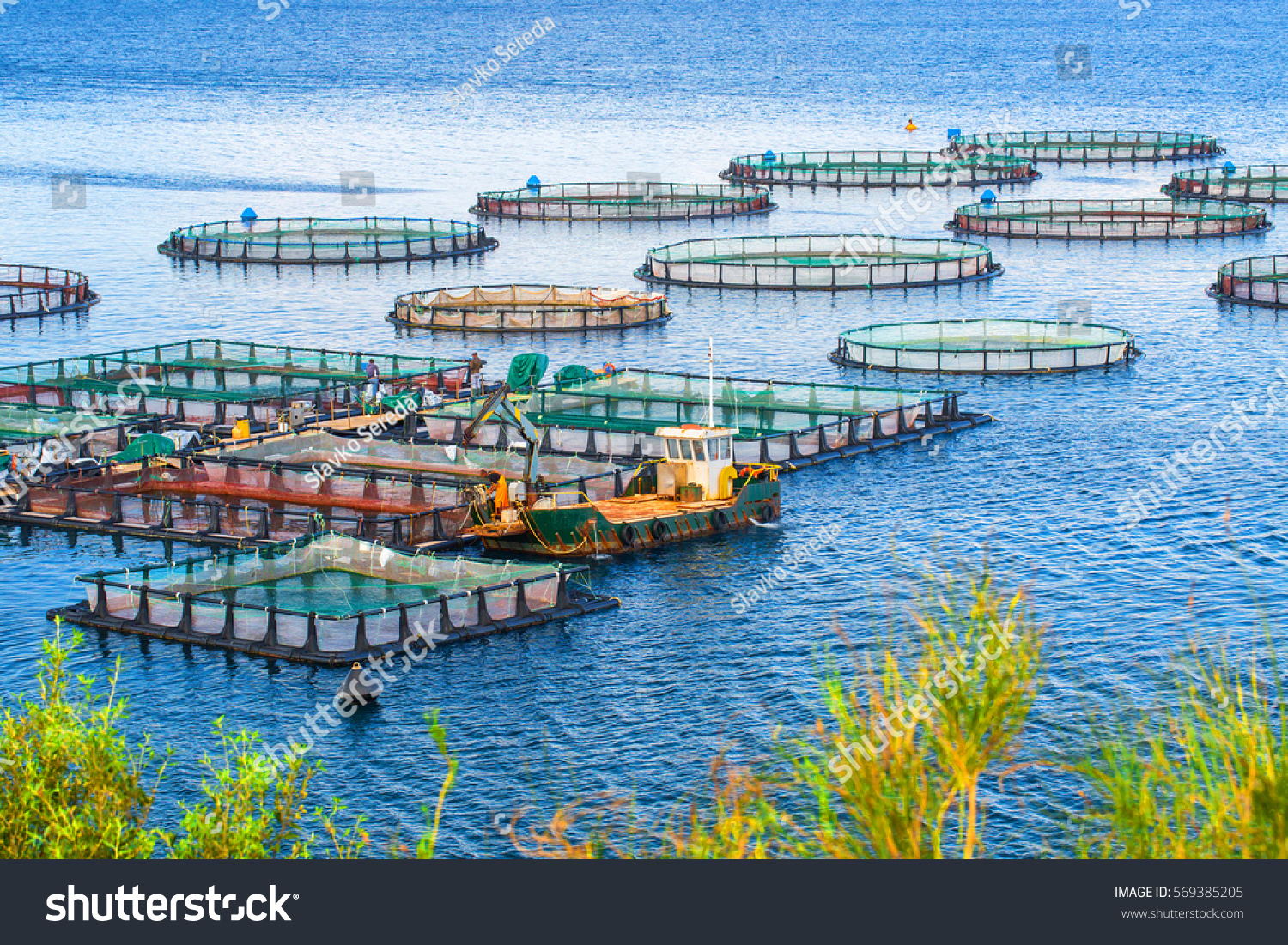 Sea fish farm cages fish farming stock photo 569385205 for What is fish farming
