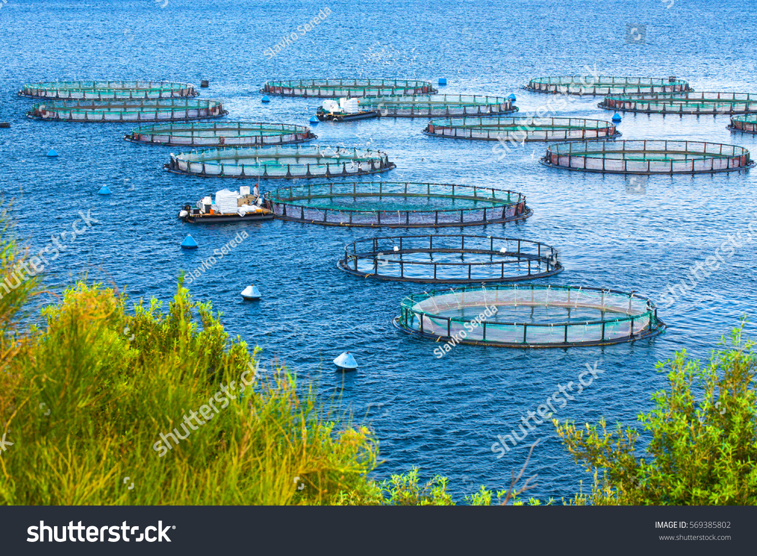 Sea fish farm cages fish farming stock photo 569385802 for What is fish farming