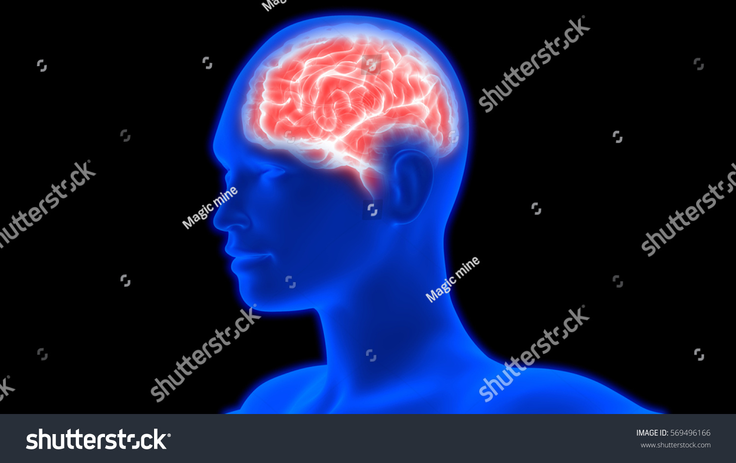 Human Brain Anatomy 3 D Stock Illustration 569496166 - Shutterstock