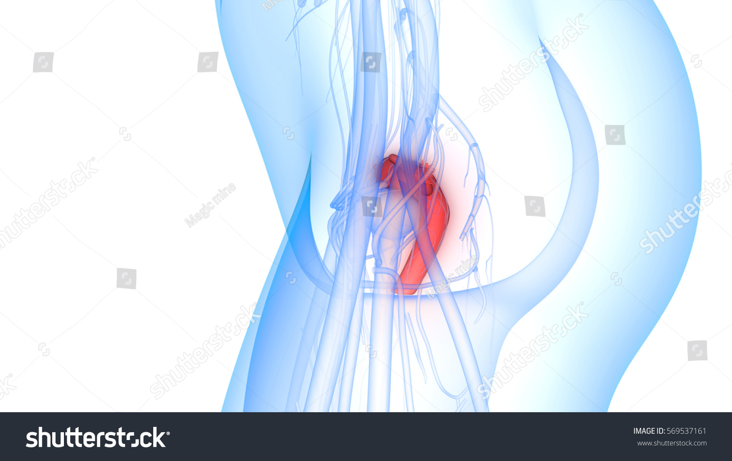 Female Reproductive System Nervous System Urinary Stock Illustration