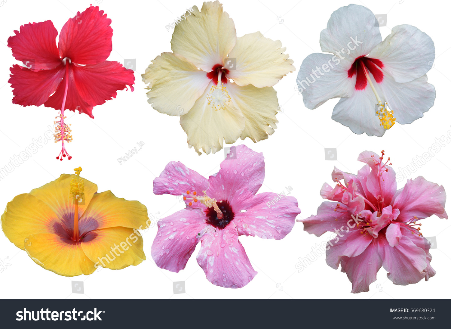 Hibiscus flower isolated flower die cut stock photo edit now hibiscus flower isolated flower die cut with path izmirmasajfo