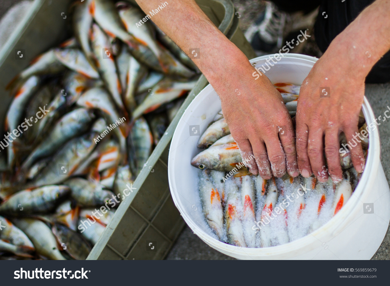 How to put out fish