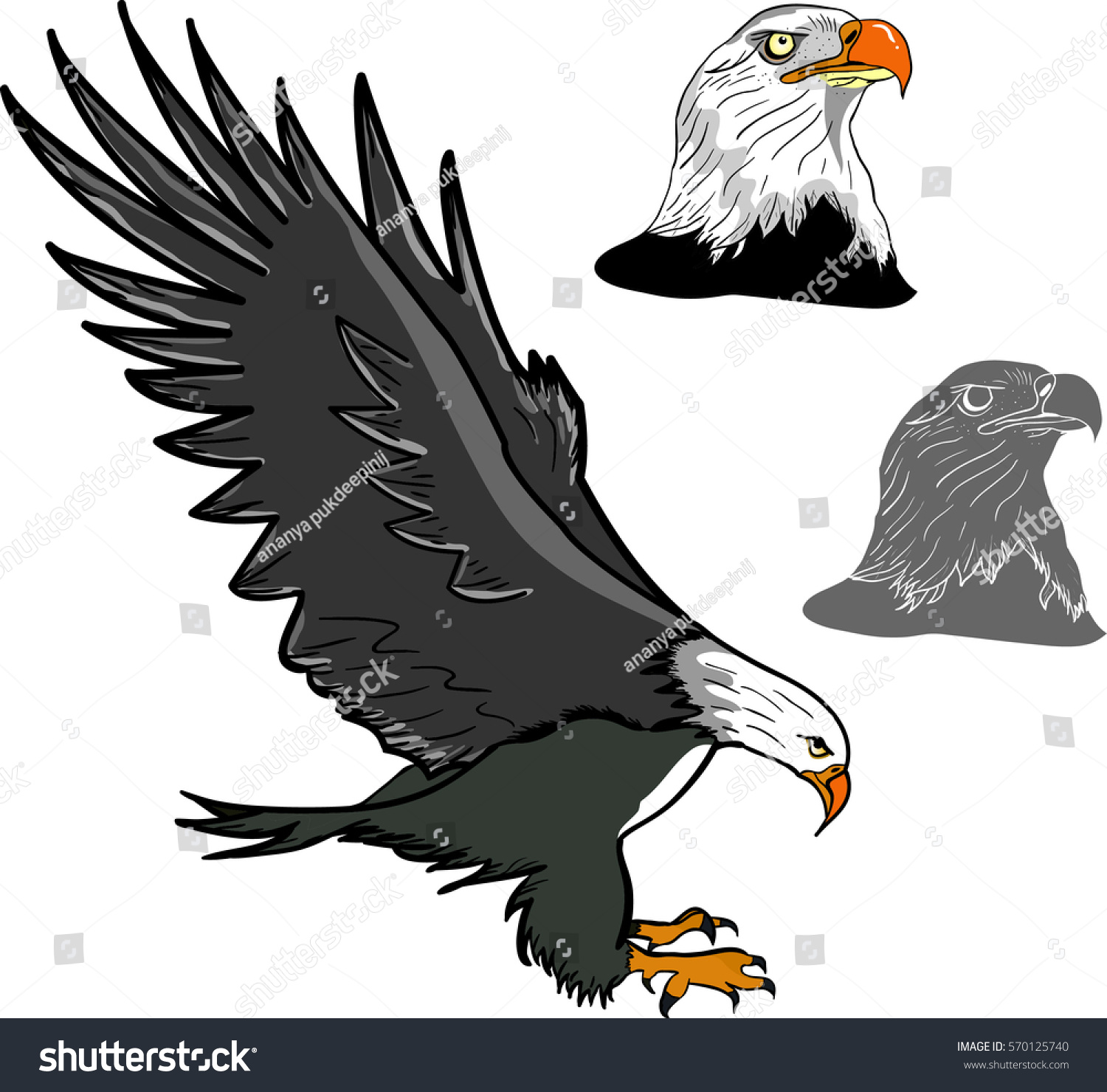 Bald Eagle Flying Eagle Landing Eagle Stock Vector Royalty Free