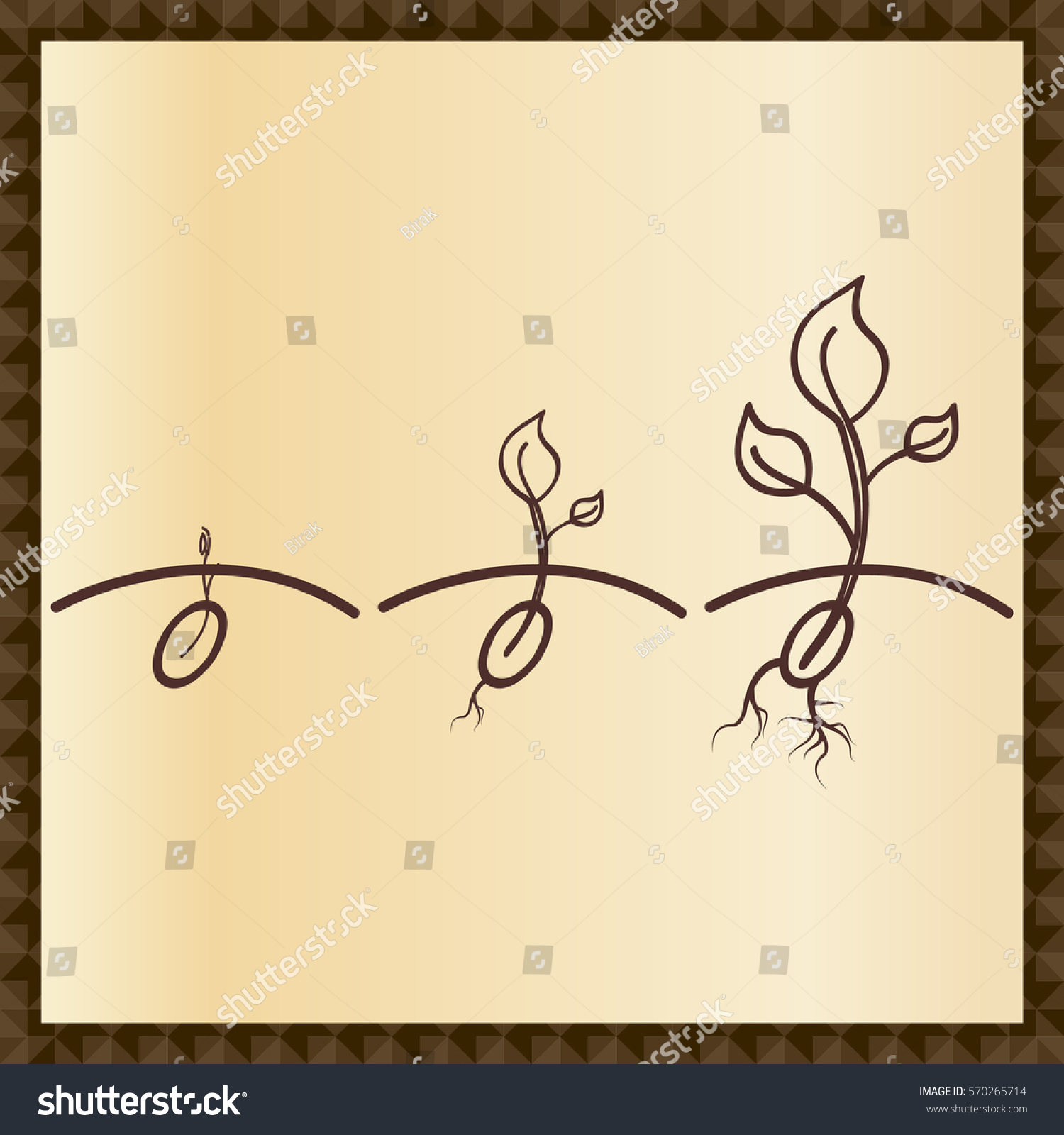 Plant Growth Stages Seeds Sprouts Seedling Stock Vector Royalty Diagram Showing The Of Seed Germination And Stem Root Contour Line