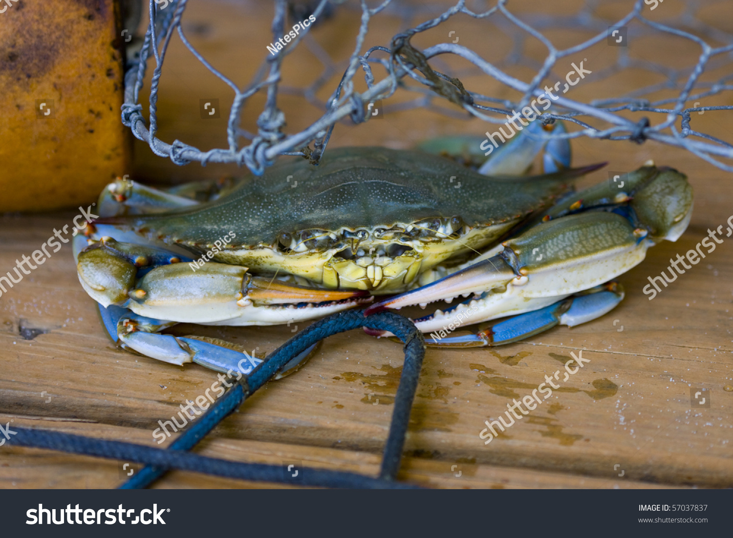 Lobster Trap Building Supplies | Lobster House