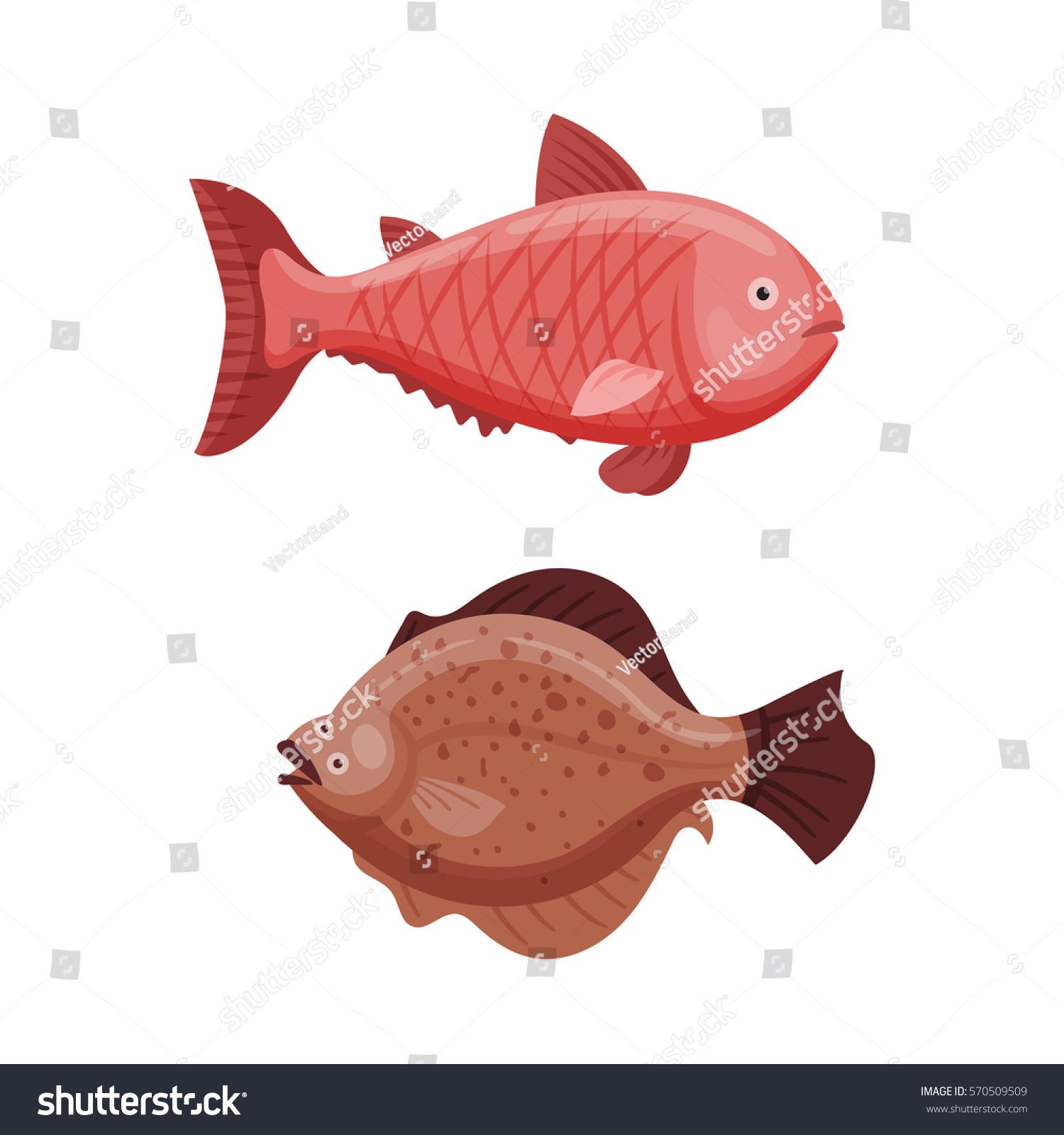 Grouper Cod Fish Vector Illustration Stock Vector 570509509 ...
