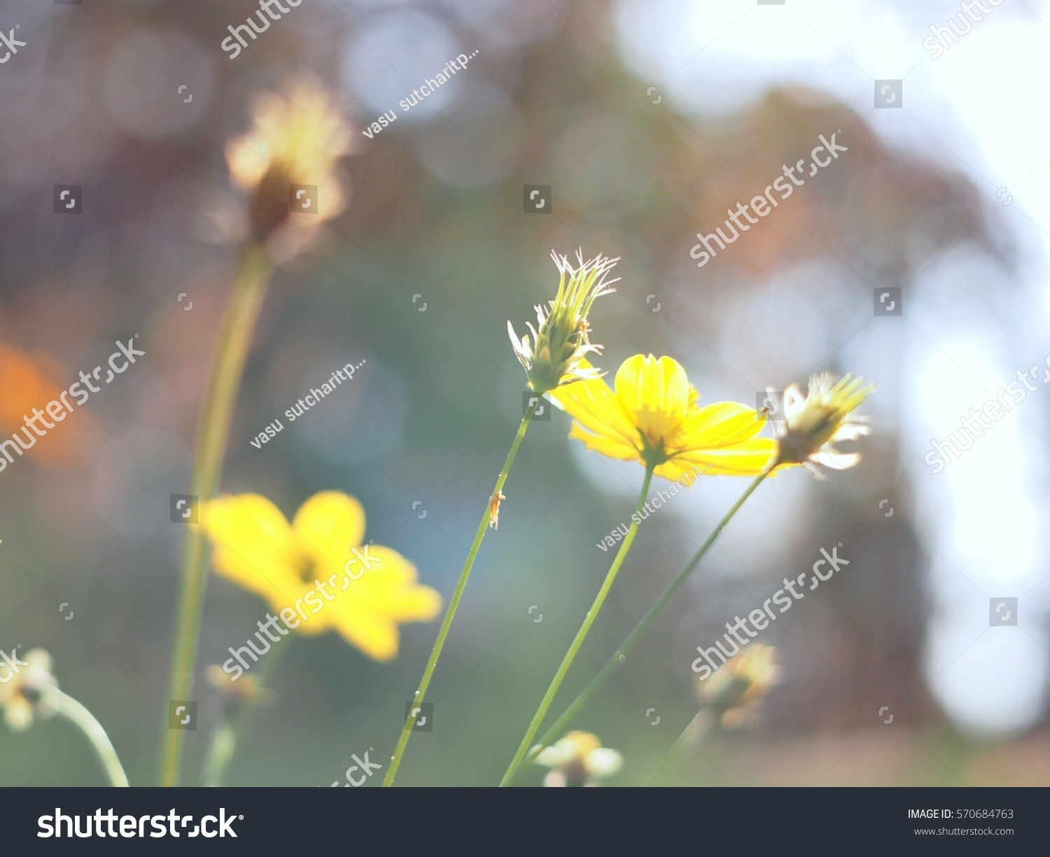 Yellow Flowers Grass Color Background Close Stock Photo Edit Now