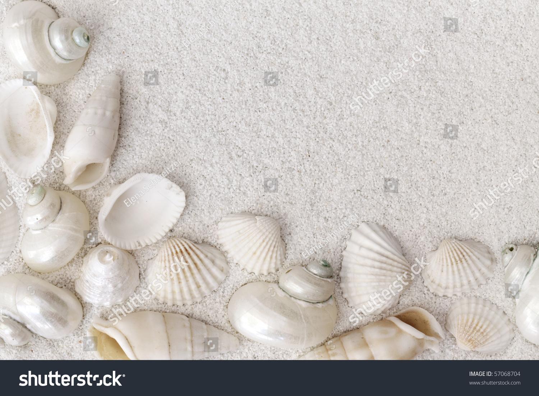 White Shells Close Up On White Stock Photo - Image: 71679576