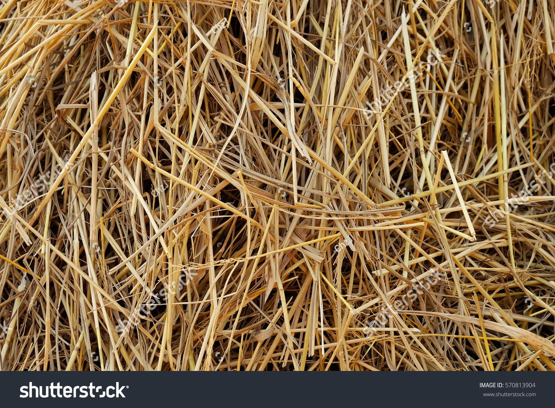 straw dry straw straw background texture の写真素材 今すぐ編集