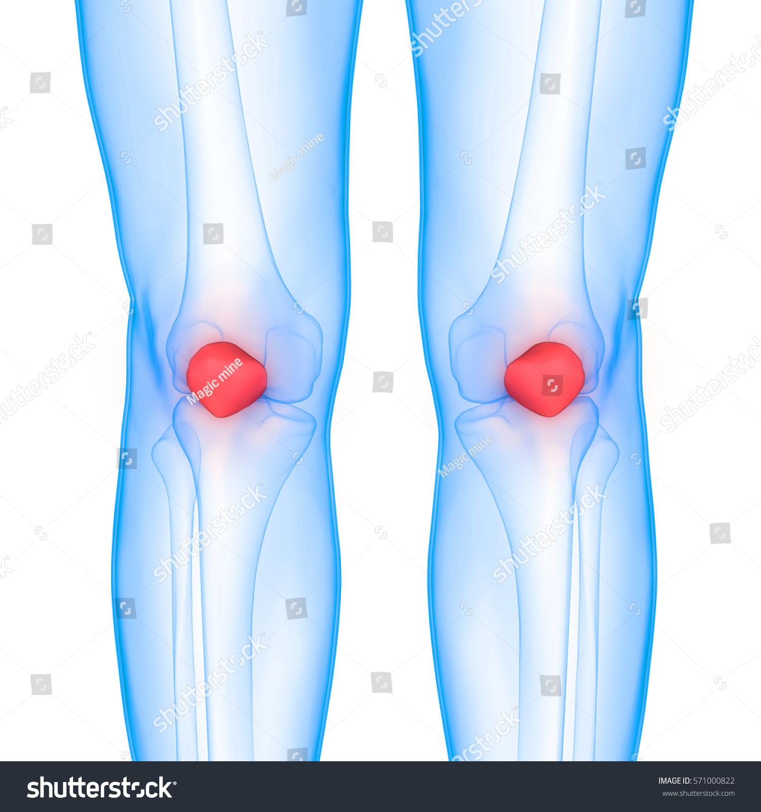 Human Body Bone Joint Pains Anatomy Patella 3d Ez Canvas