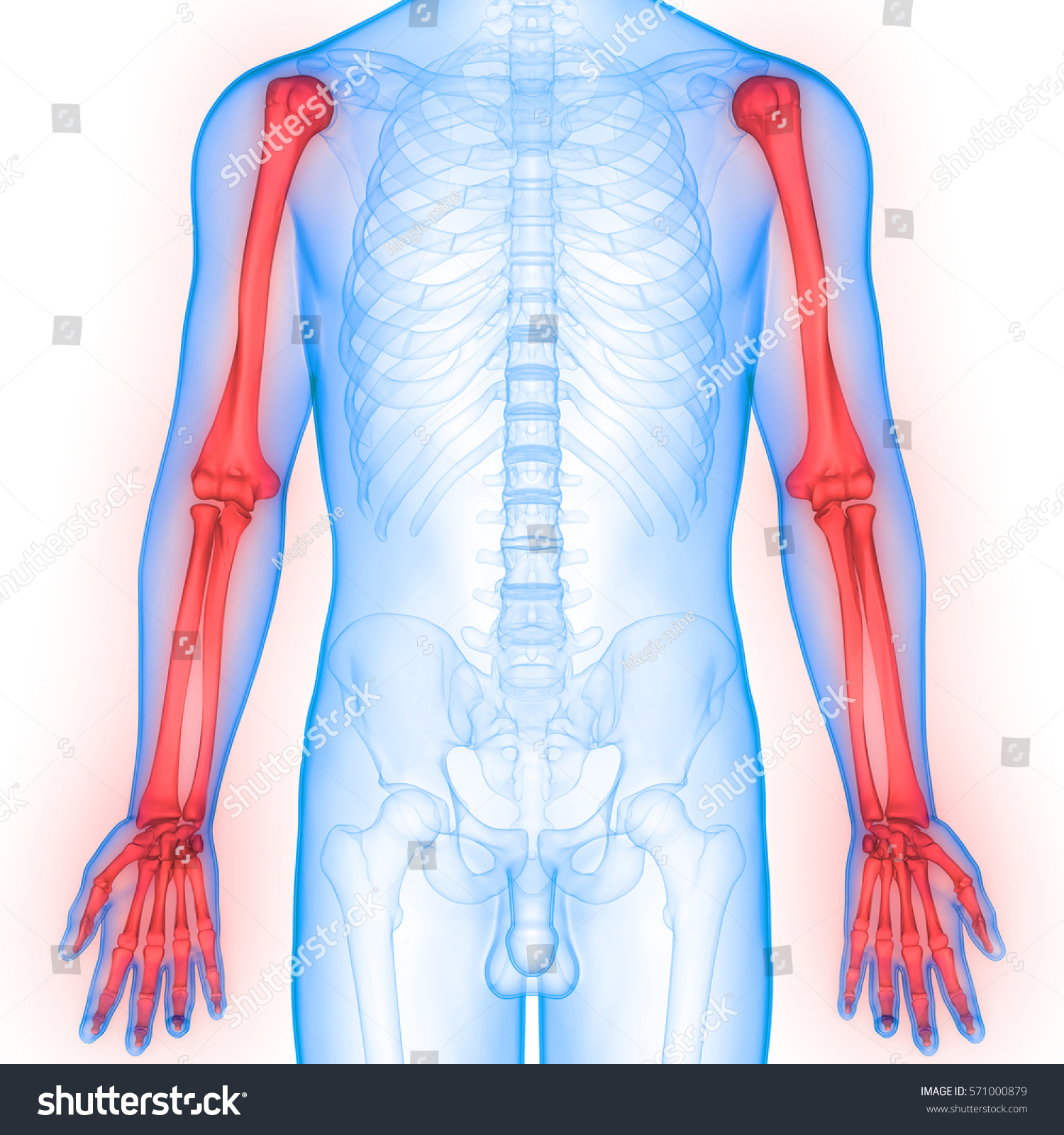 Human Body Bone Joint Pains Anatomy Hand Joints 3d Ez Canvas