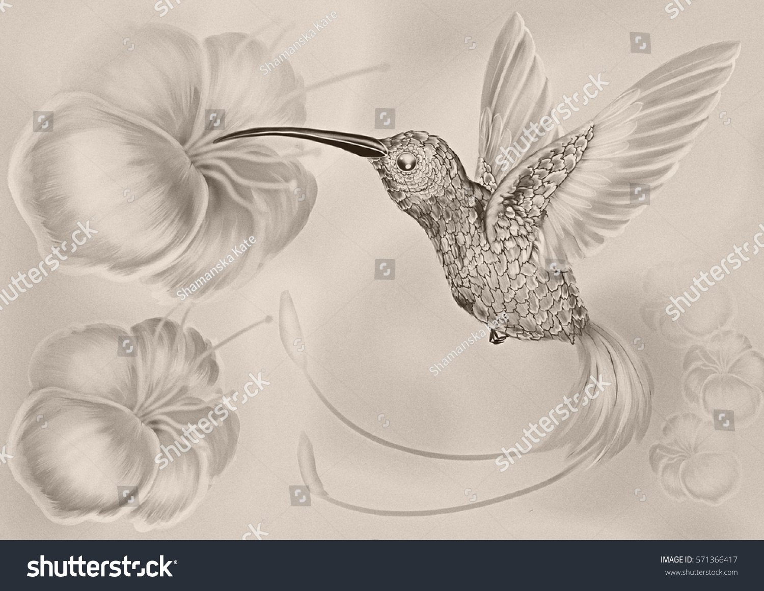 Pencil sketch hummingbird in flight and the flower digital drawing