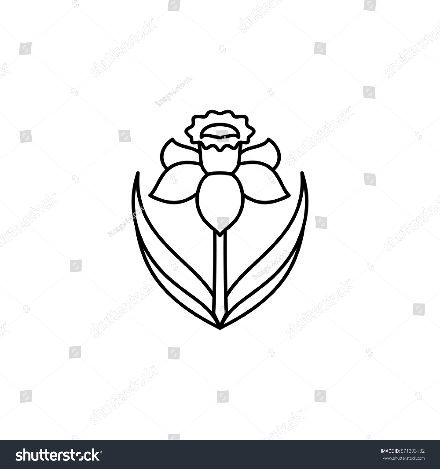 daffodil symbol wales uk st david stock vector 571393132