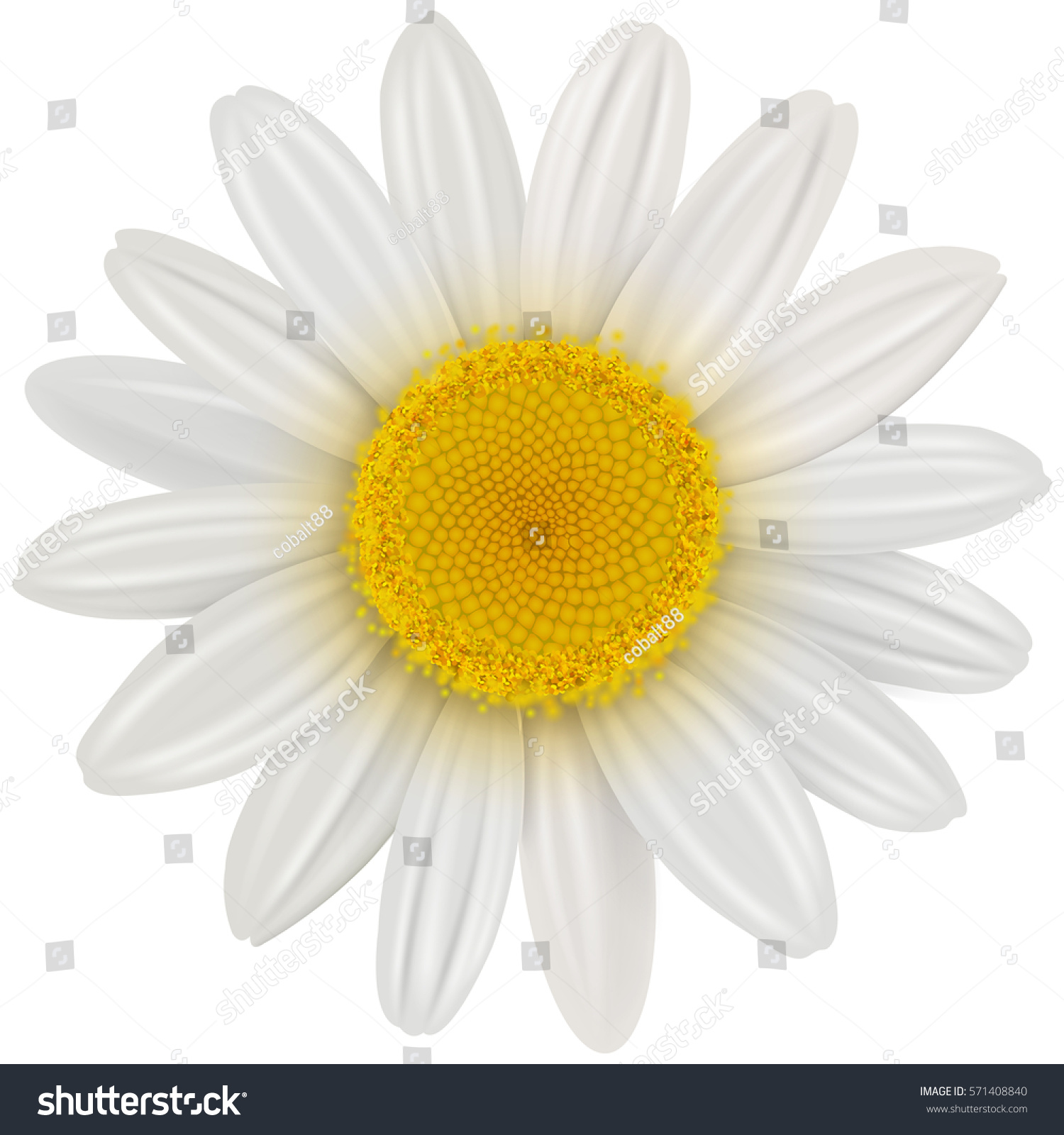 Daisy Flower Isolated Vector Illustration Stock Vector Royalty Free