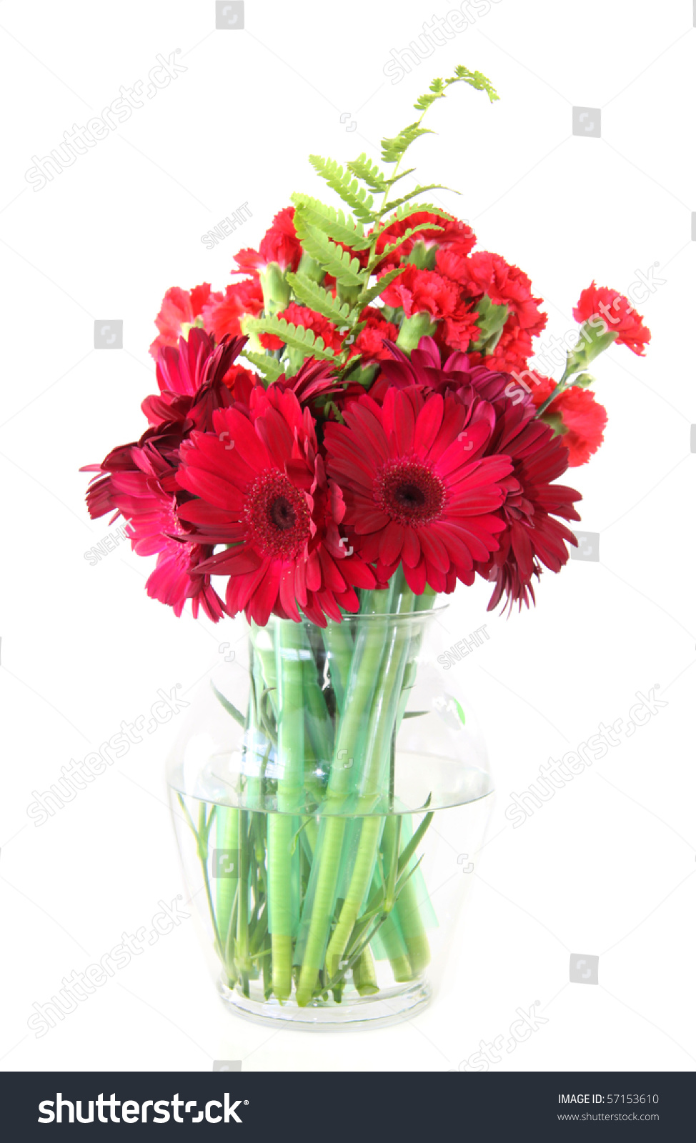 Beautiful Red Colored Flowers Glass Vase Stock Photo 57153610 ...
