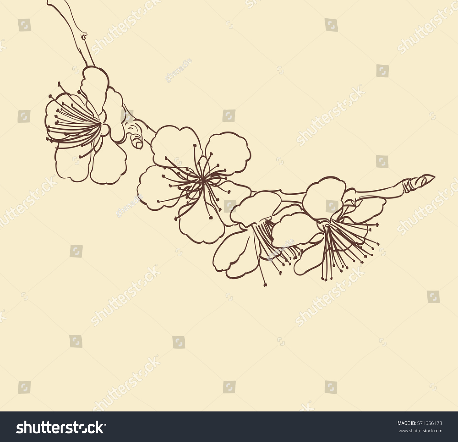 Line Drawing Spring Flowers : Blossoming tree flowers line art hand stock vector