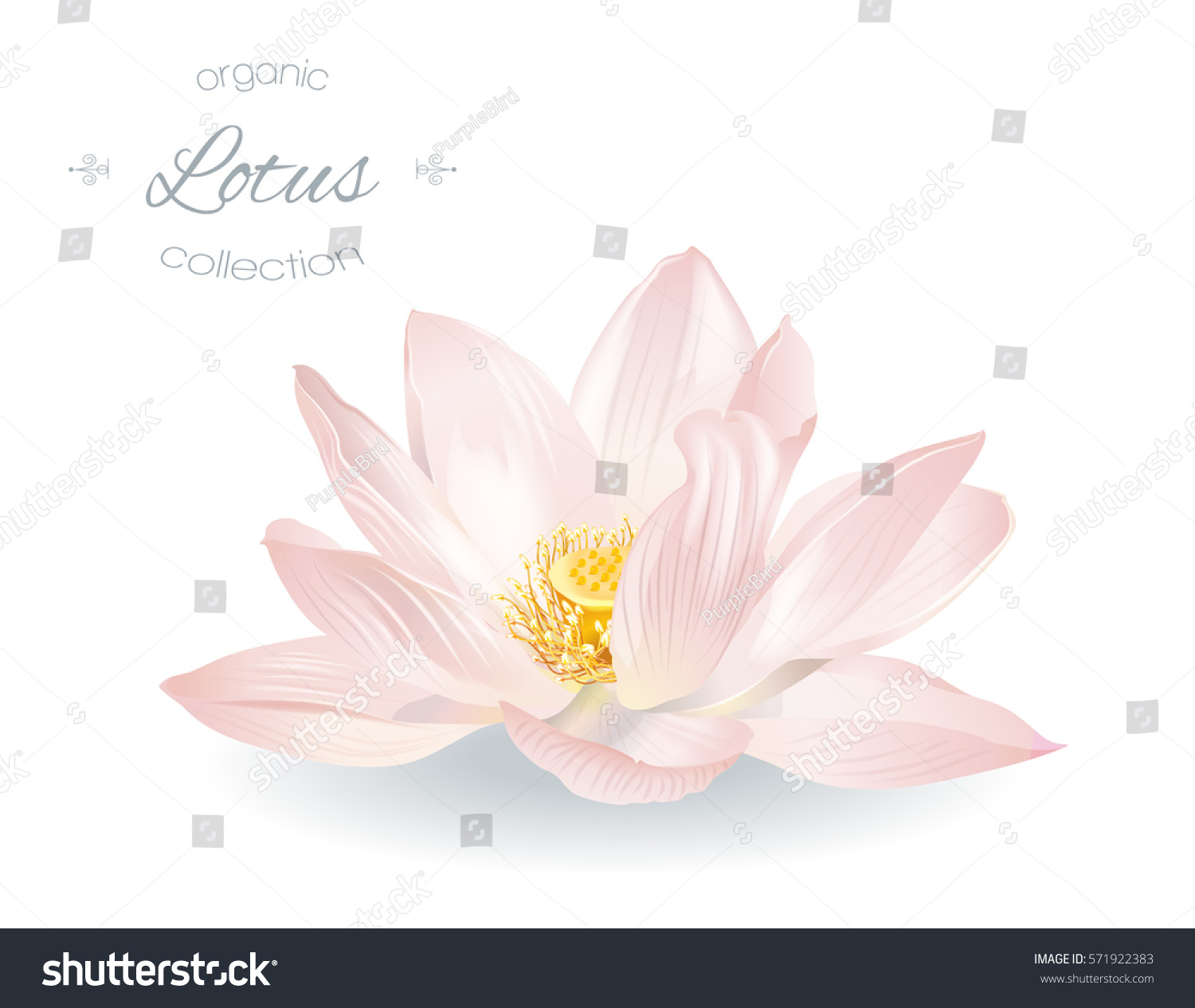 Vector realistic illustration lotus flower isolated stock vector vector realistic illustration of lotus flower isolated on white background design for natural cosmetics dhlflorist Gallery