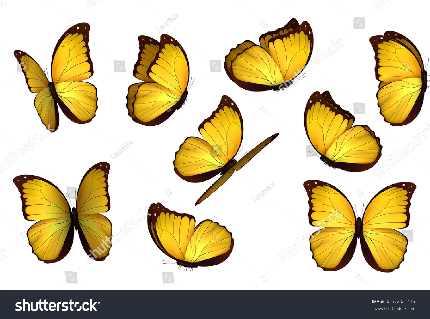 set colorful isolated butterflies insects lepidoptera stock vector