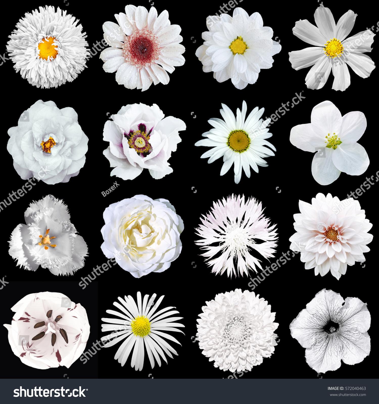 Mega Pack Natural Surreal White Flowers Stock Photo 572040463