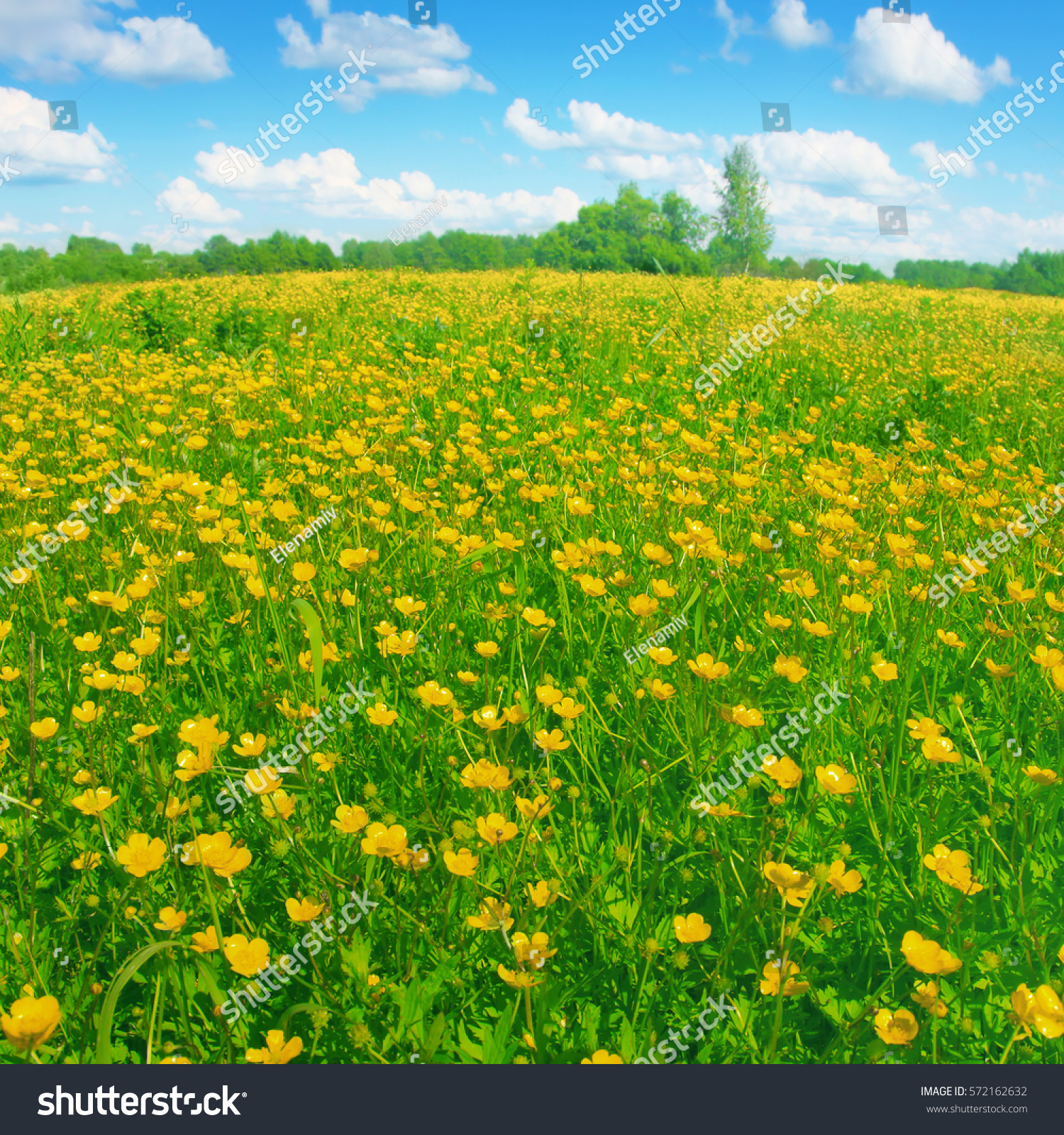 flowers field coud sky -#main