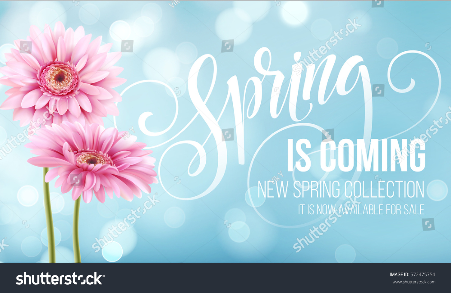 Gerbera Flower Background and Spring is coming Lettering. Vector Illustration EPS10 #572475754