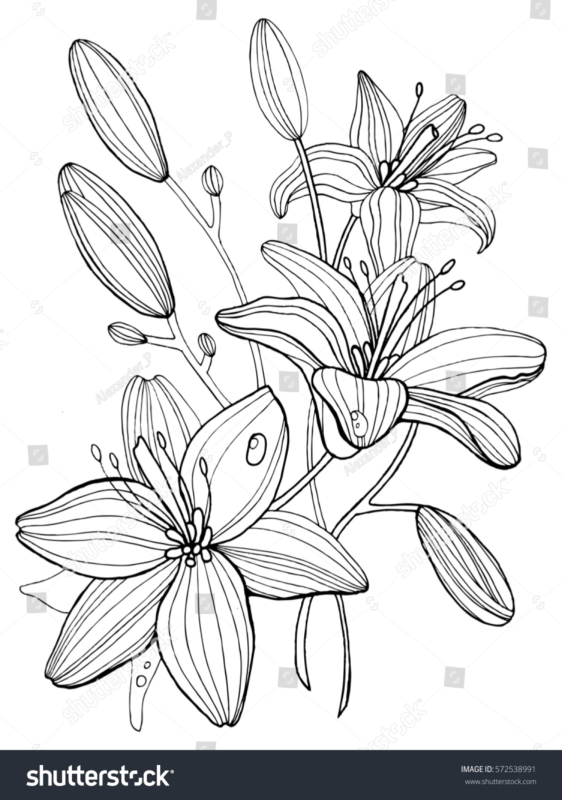 Lily flowers coloring book raster illustration stock illustration lily flowers coloring book raster illustration anti stress coloring for adult tattoo stencil izmirmasajfo