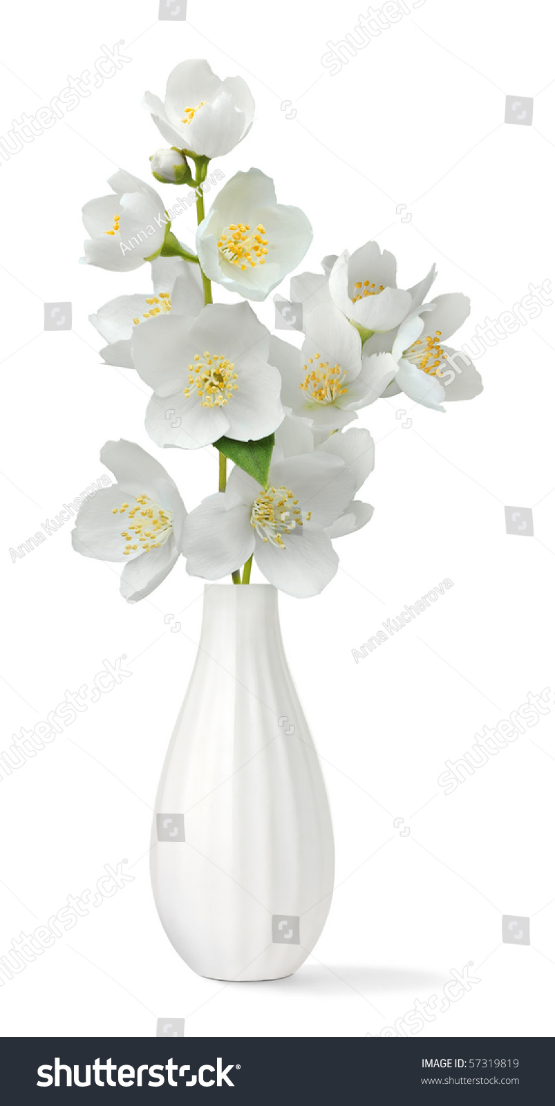 Small Vase Bunch Jasmine Flowers Isolated Stock Photo Royalty Free