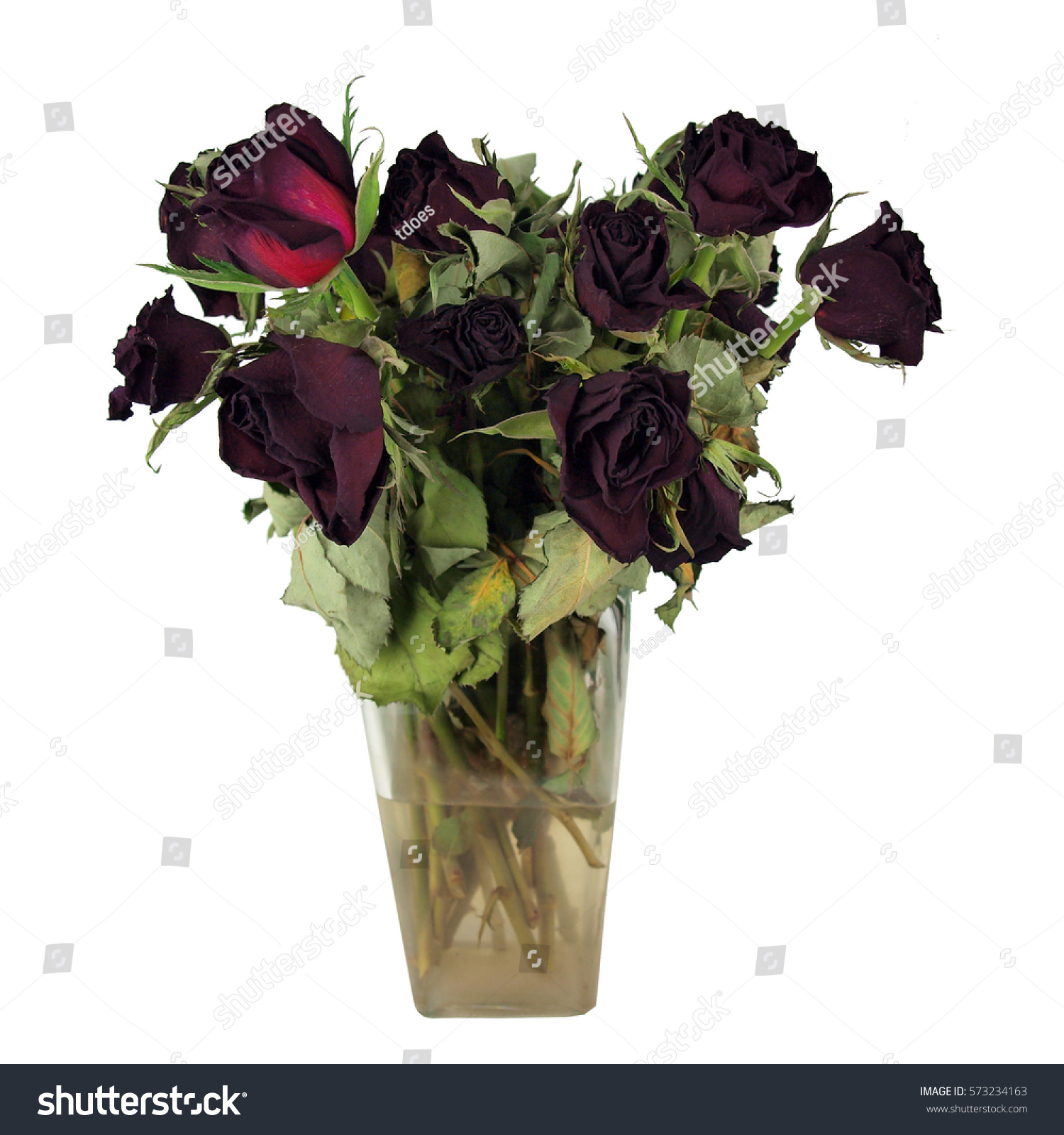Bouquet Dead Red Roses Clear Glass Stock Photo Edit Now 573234163
