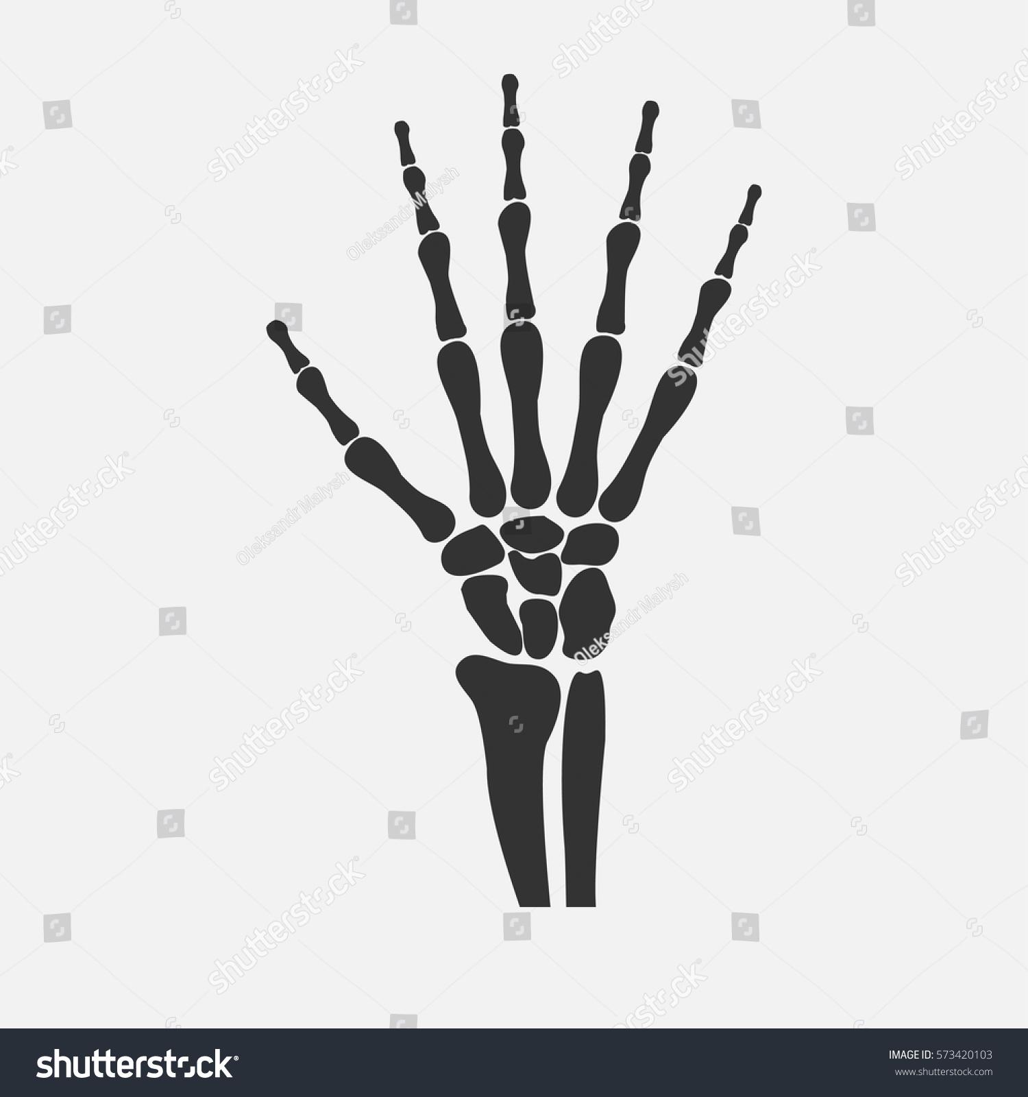 Human Wrist Hands Bones Vector Stock Vector 573420103 - Shutterstock