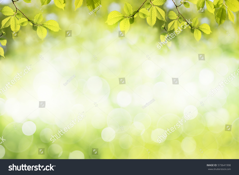Fresh green tree leaves, frame. Natural background. #573641998