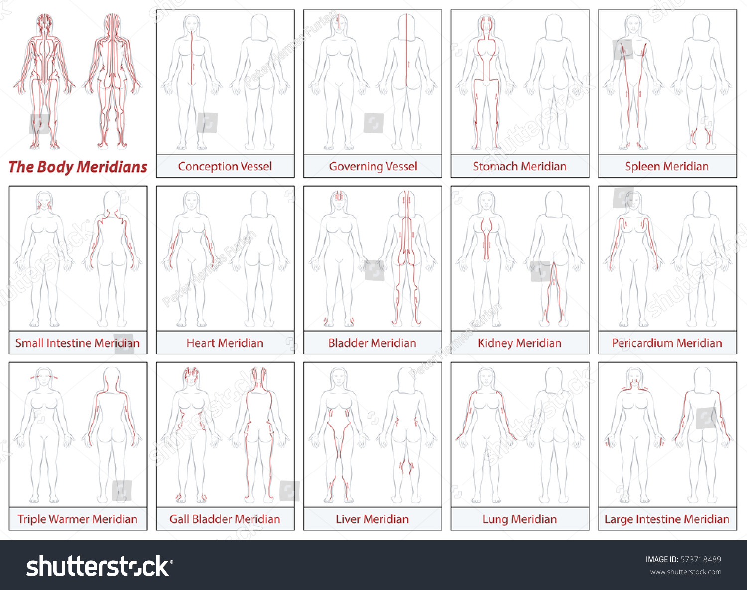 Body Meridians Chart Female Body Schematic Stock Vector Royalty
