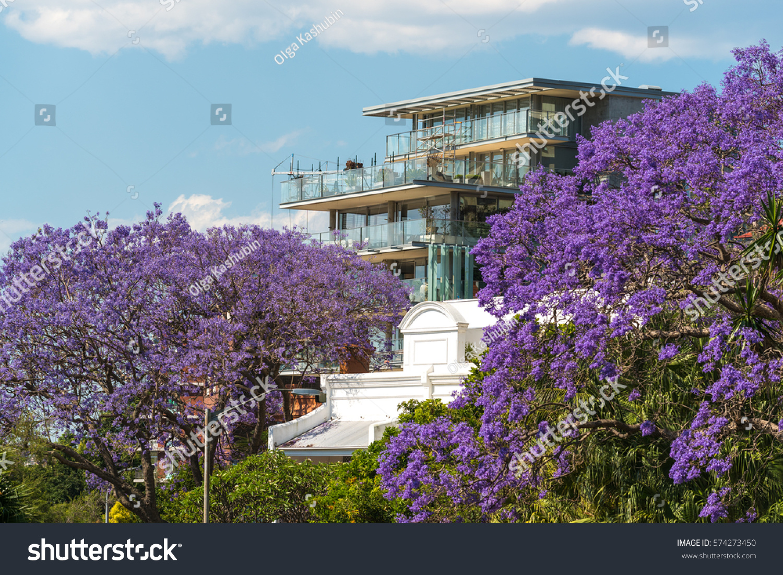 Blooming Jacaranda Trees Urban Background Spring Stock Photo