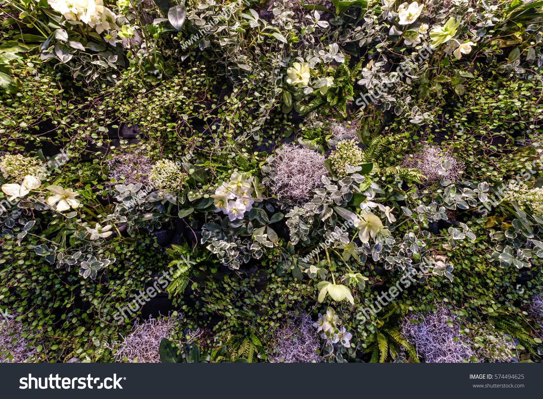 Background Ivy Ferns Purple Yellow Flowers Stock Photo Edit Now