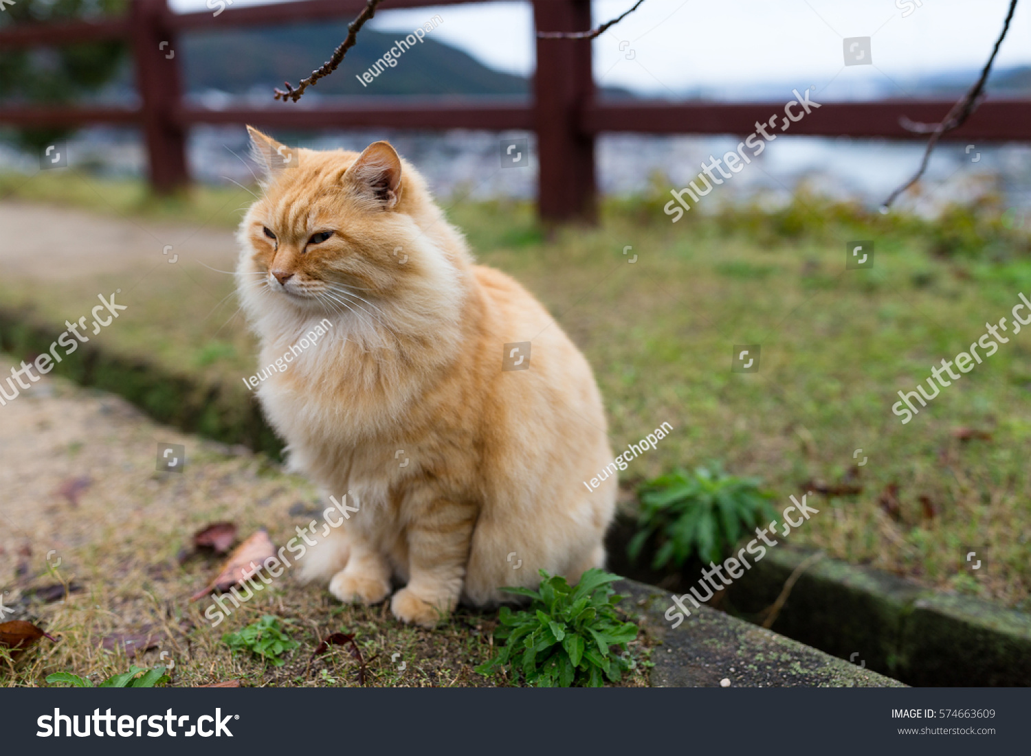Adorable Cat Sitting Park Stock Shutterstock