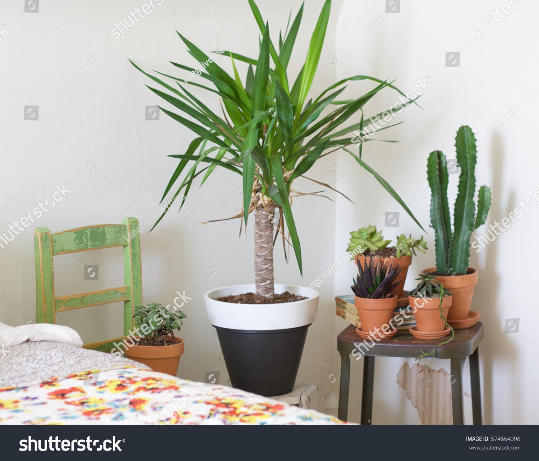 Plants Succulents Display Bedroom Stock Photo Edit Now 574664098