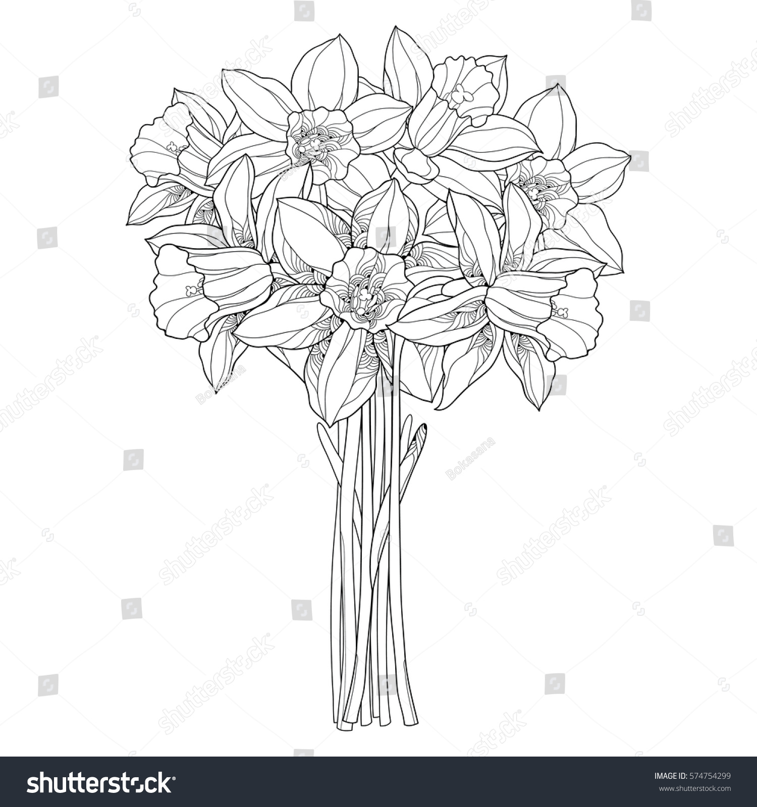 vector bouquet outline narcissus daffodil flowers stock vector