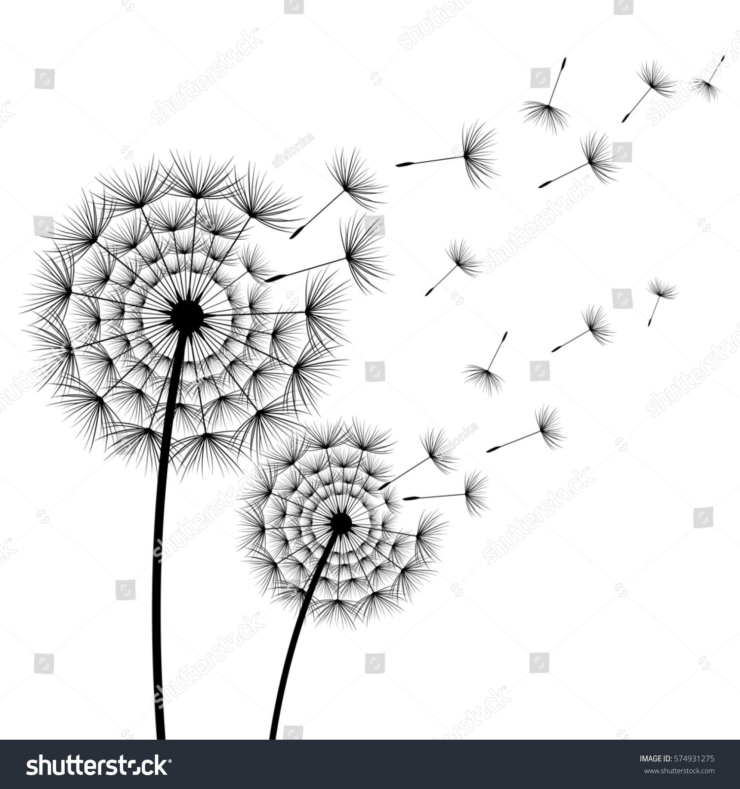 Two Beautiful Stylized Black Flowers Dandelions 574931275