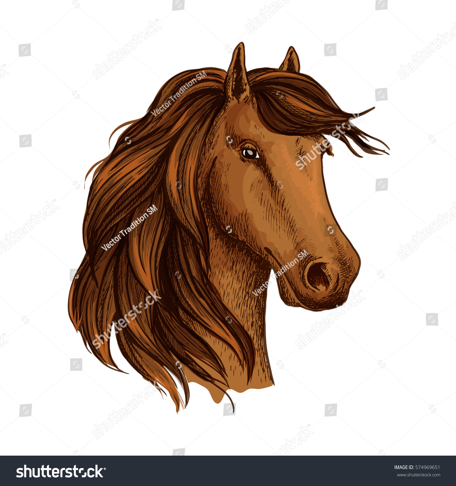 Horse Mustang Foal Young Equine Mare Stock Vector Royalty Free 574969651